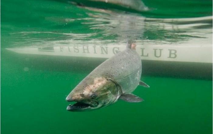 west-coast-fishing-club-salmon-fishing-haida-gwaii-british-columbia