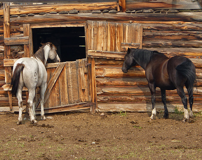Horse Barn, Nimpo Lake, Chilcotin BC