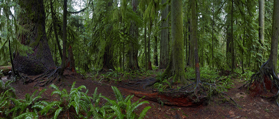 Cathedral Grove, Russ Heinl Photo Gallery, British Columbia